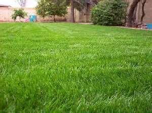 copy63_rye grass small